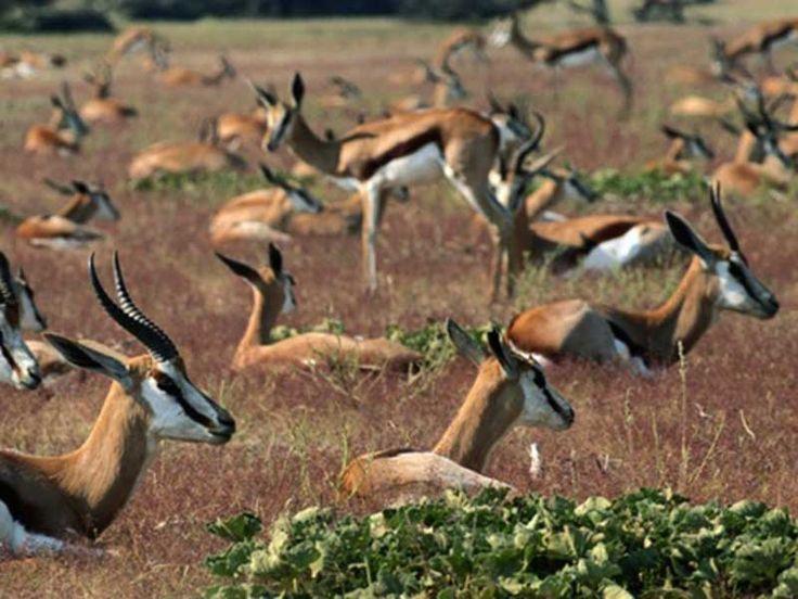 Shamirpet Deer Park or Jawahar Deer Park in Telangana, India