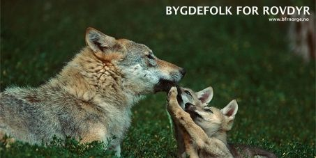 ** Pls Sign **  Prime minister, Erna Solberg and the Secretariat of the Bern Convention: Stop Norway's plan to slaughter our wolves/Stopp utryddelsen av vår...#wolves  #petition