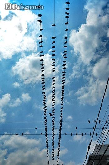 214 palomas hacen un bonito espectáculo al posarse sobre los cables de energía en el barrio Alameda.