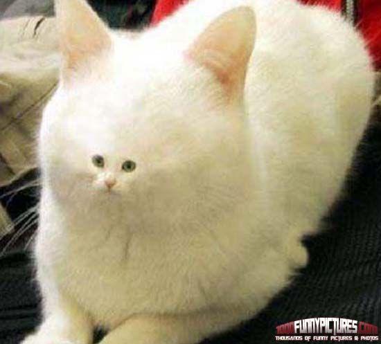 17 Best Images About Catz On Pinterest