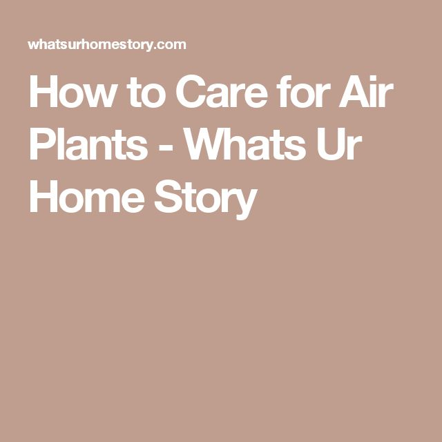 How to Care for Air Plants - Whats Ur Home Story