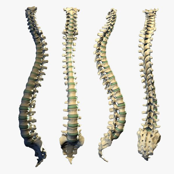 Real Human Spine