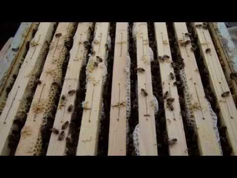UrBees a Torino: la città del futuro riparte dalle api