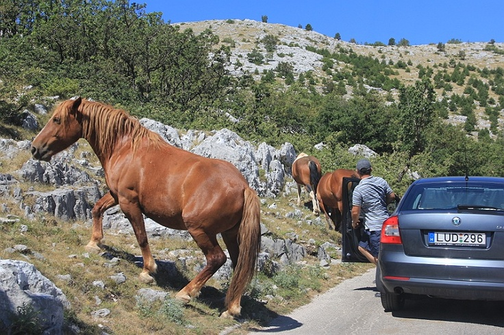 We drove by car to the hill of Sv Jure in Nature Park Biokovo in Croatia #croatia #chorwacja #biokovo #svjure