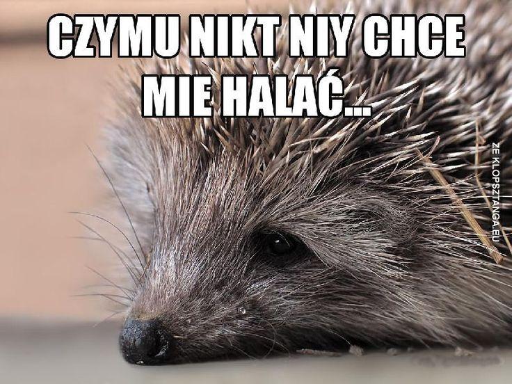 Halaniy