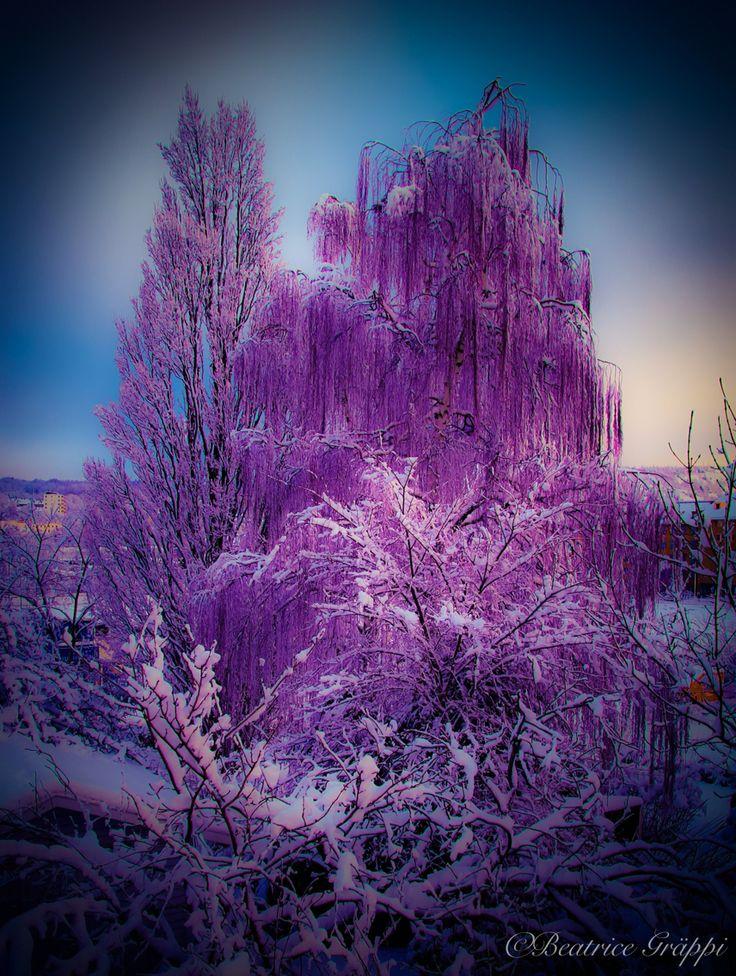 Winter  Photography/ Digital art by Beatrice Gräppi