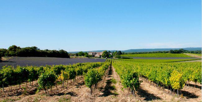 Salon des vins du Languedoc - Le Figaro Vin