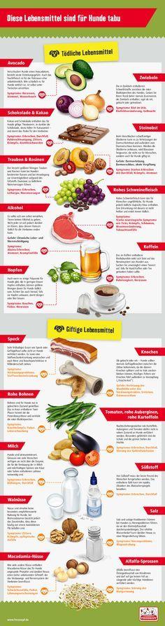 Giftige Lebensmittel für Hunde - FRESSNAPF Deutschland