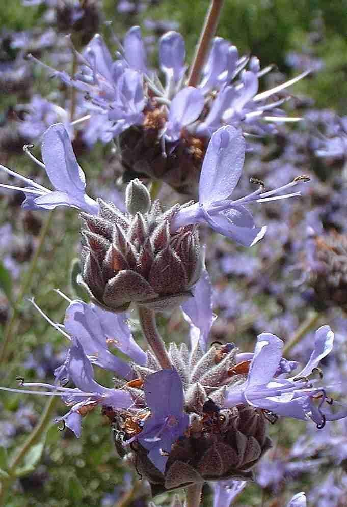 484 best home garden and yard plant list images on for Best flowers to grow in california