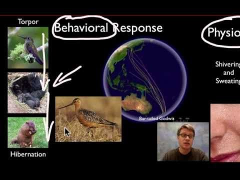 negative feedback in living organisms Living organisms are self-replicating and self-sustaining dynamic chemical   homeostasis is secured by negative feedback, in which the magnitude of a cause .