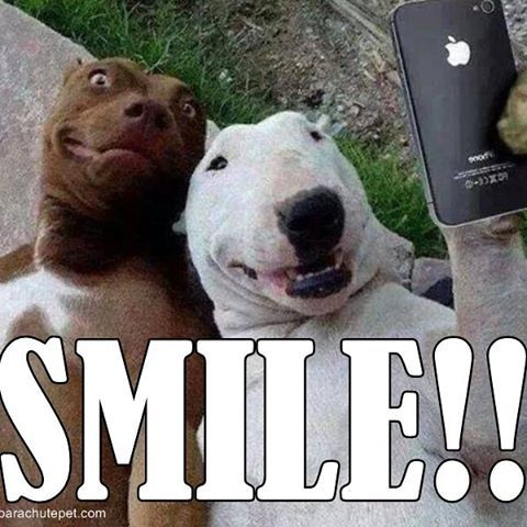 funny smiling animal pictures