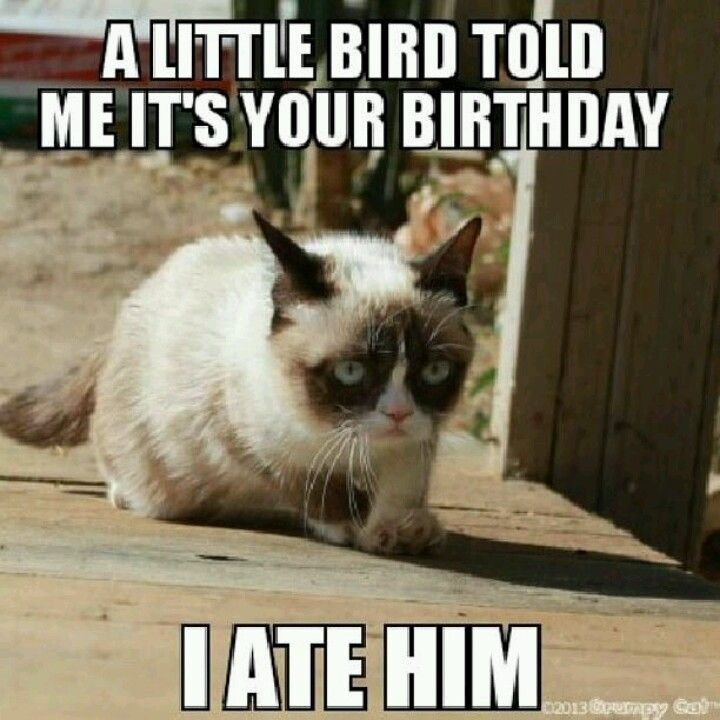 Best 25+ Happy Birthday Sister Funny Ideas On Pinterest