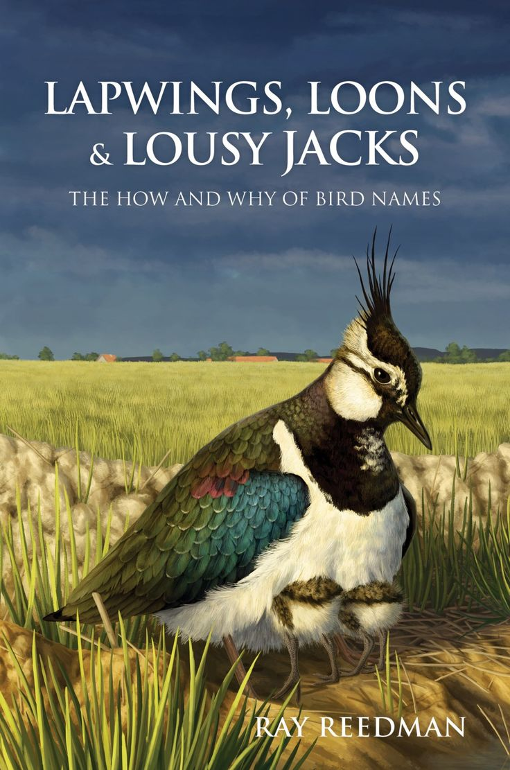 Lapwings, Loons And Lousy Jacks: The How And Why Of Bird Names, By