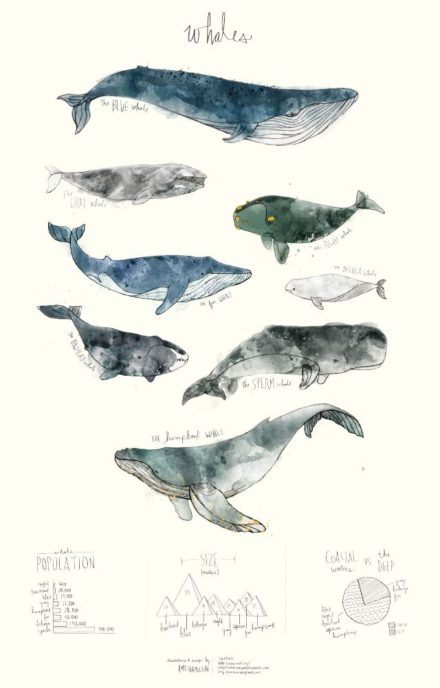 752 best Whales images on Pinterest | Marine life, Baleen whales and ...