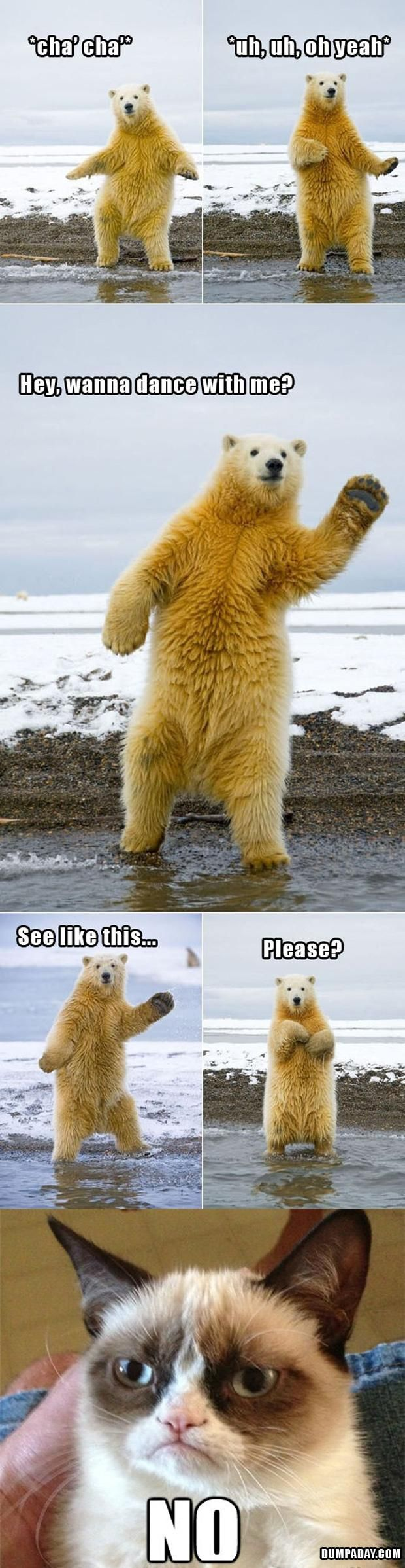 funny polar bear pictures | ... Day grumpy cat, dancing with polar bear, funny pictures - Dump A Day