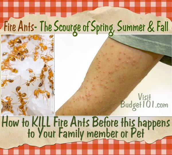 Guilt Free Fire Ant Killer. But who really feels guilty when killing a fire ant?