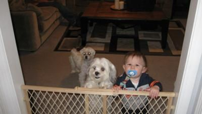 Toby with our grandson Weston: Our Shih Tzu Maltese mix is almost two and is very much a part of our family. He is spunky at times but also loves to take long naps on the back of the