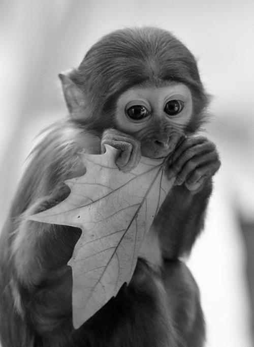 aw baby monkey