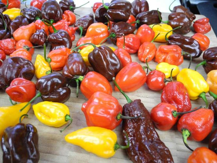 The World's Hottest Pepper Sauce Using Trinidad Moruga Scorpion and Ghost Peppers (Bhut Jolikia).