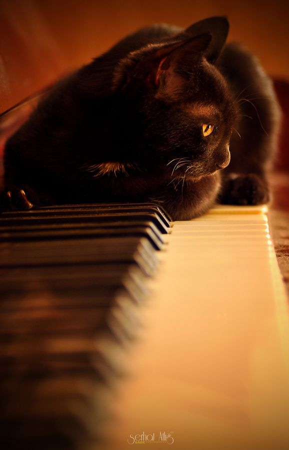 On piano - Mine do this and they like to walk across the keyboard back and forth back and forth!: