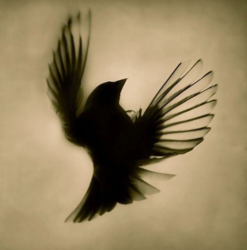 "sparrow silhouette tattoo - the song ""two sparrows in a hurricane, trying to find their way..."" Meaning me and billy"