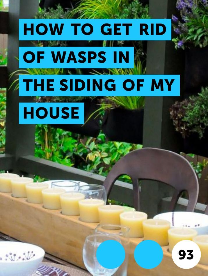 Learn How To Get Rid Of Wasps In The Siding Of My House How To Guides Tips And Tricks Get Rid Of Wasps Getting Rid Of Bees Growing Vegetables