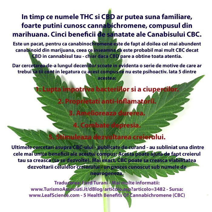 O solutie europeanã pentru o problemã europeanã: legalizarea canabisului. Organizatia ECI Weed are ca scop adoptarea unei politici comune in...