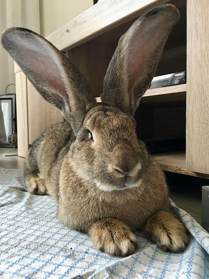 Atemberaubend Drahtkäfige Für Kaninchen Herstellen Fotos ...