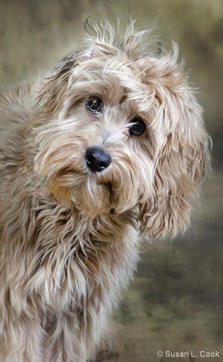die besten 25 terrier mischling ideen auf pinterest terrier mix rassen pitbull mix rassen. Black Bedroom Furniture Sets. Home Design Ideas