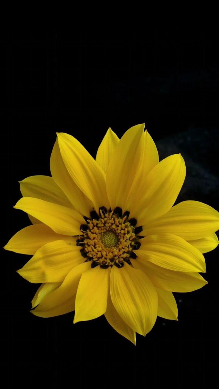 The 25 best Sunflower iphone wallpaper ideas on Pinterest