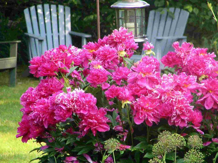 33 best grdening images on Pinterest Flower gardening Beautiful