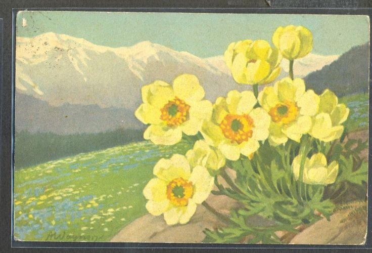 PA065 a/s WAGNER MOUNTAINS FLOWERS Yellow FLOWERS  Fine LITHO