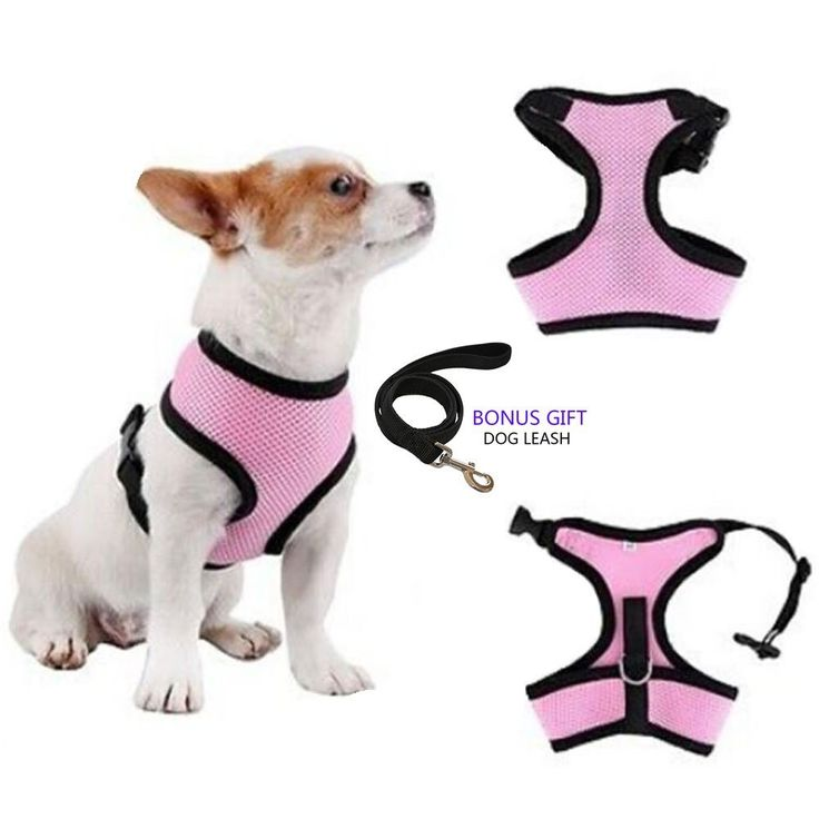 No Pull Dog/Cat Harness and Leash Set for Walking, Padded Dog Vest Harnesses for Puppy Small Dogs/Cats, Cat Dog Training Collar Pink,XS,S * Read more reviews of the product by visiting the link on the image. (This is an affiliate link and I receive a commission for the sales)
