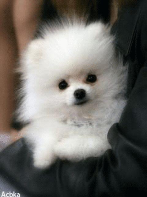 Puppy Love ♡ ♡ Animali Cuccioli Nani E Cuccioli