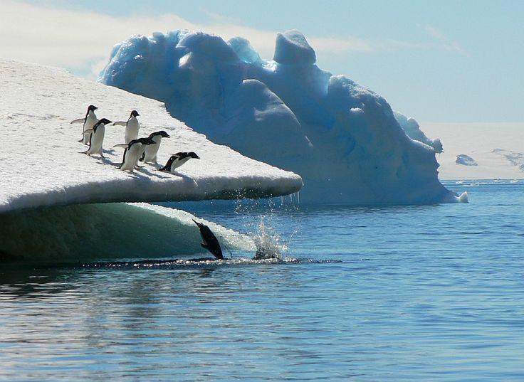 Colonie de manchots - croisière en Antarctique