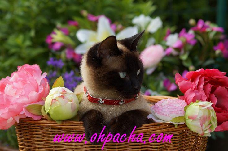 Découvrez le collier pour chat glam rouge chez Oh ! Pacha. Egalement disponible en noir. http://www.ohpacha.com/collier-pour-chat/188-collier-glam-rouge-pour-chat-cuir.html