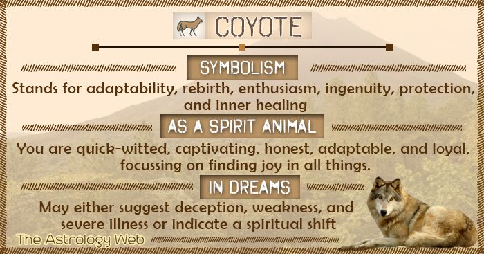 Coyote Meaning And Symbolism In 2020 Coyote Symbolism Animal