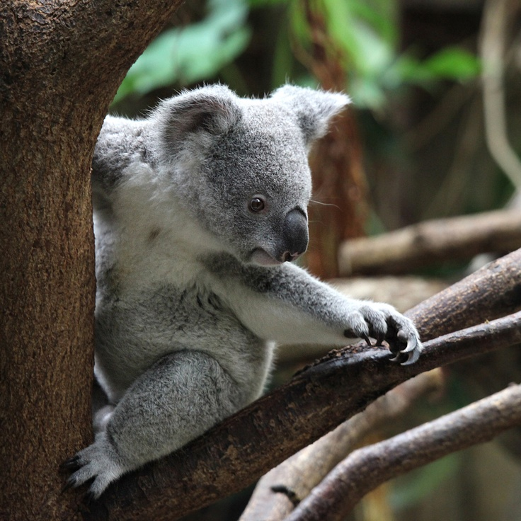 Plus de 1000 idées à propos de Animals sur Pinterest