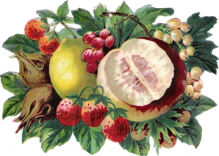 Oblaten Glanzbild scrap die cut chromo Obst 17,5cm Nuss nut Beeren berry lemon