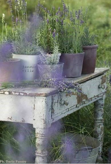 Hazy pots of lavender on a weathered table