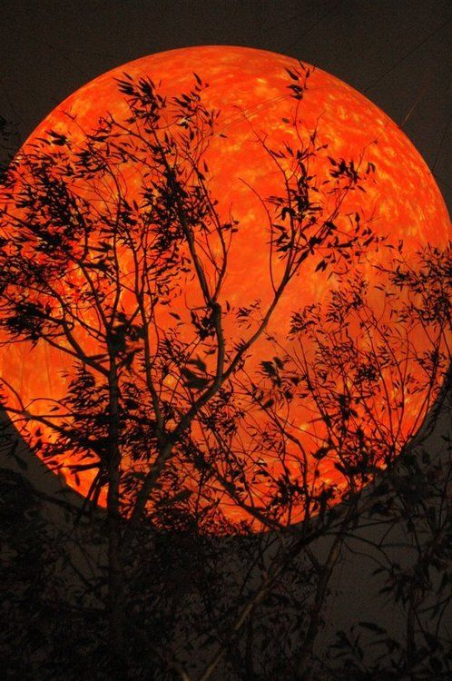 - Harvest Moon - Fall - Autumn - this kind of moon definitely makes for the best Halloween! Very eerie!!