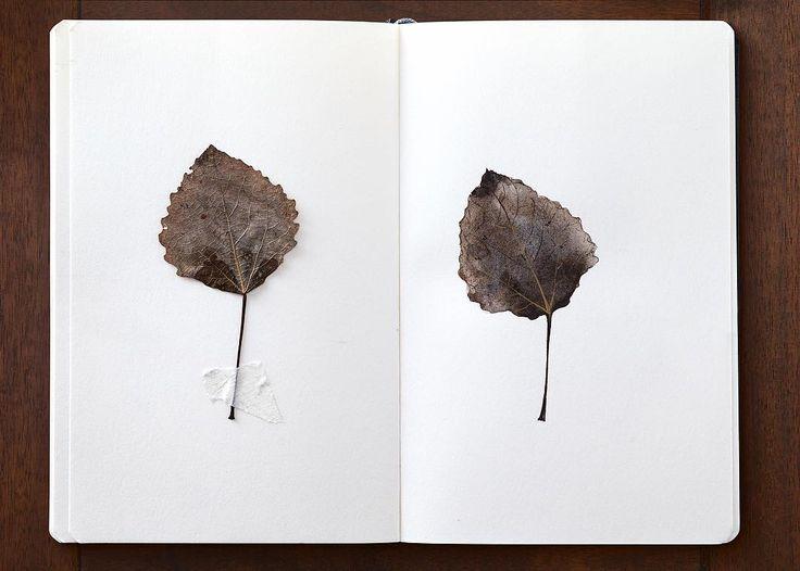 Autumn 🍂 10 minutes sketch  Люблю цвета осени! Такие естественные, такие натуральные! Использовала любимую сиену жженую, сепию и ультрамарин Заполняю свой #ботанический_скетчбук с @maryana_bryukhanova ✨