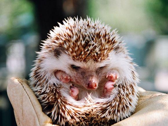 Grumpy | Cutest Animals | Pinterest