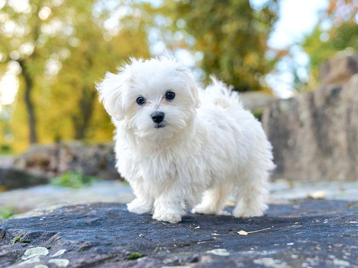 Wünschst du dir auch spannende Ideen für deine Gassigänge und fändest es toll, wenn dein Hund ganz nebenbei auch noch lernen würde, in allen Situationen zu gehorchen?