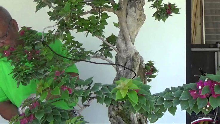 Bonsai Tutorials for Beginners: How to Wire a Pre Bonsai Material