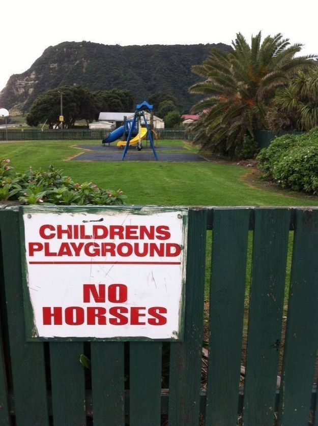 But we do not allow horses. | 29 Pictures That Prove New Zealand Is The Greatest Country On Earth