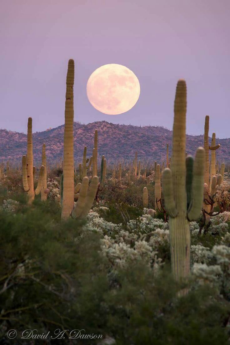 Super Moon over Arizona 2016 430 best