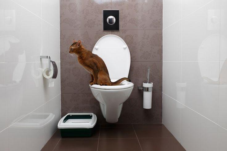 Cómo enseñar a tu gato a usar el wc