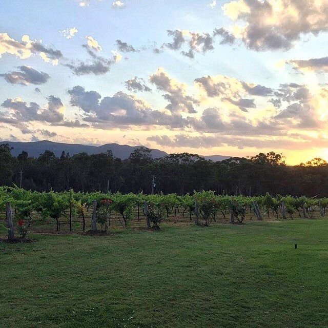 Watching the sunset over the vines at Spicers Vineyards Estate #spicersretreats  #spicersvineyardsestate