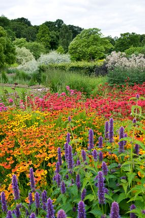 Main Borders at RHS garden Harlow Carr - looks like beebalm, black-eyed susan, and anise hyssop.